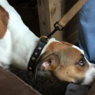 Détection de punaises de lit, la méthode canine vous connaissez ?