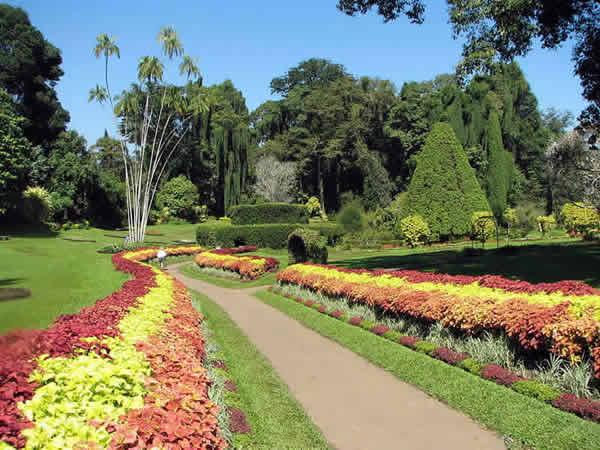 Jardin botanique de Peradenia